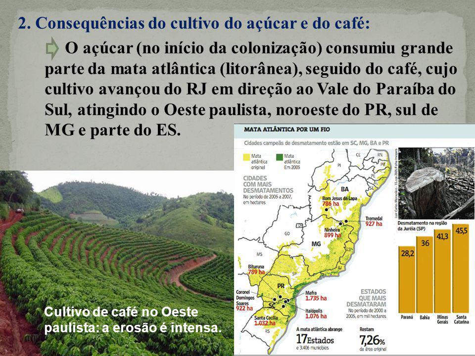 2. Consequências do cultivo do açúcar e do café: O açúcar (no início da colonização) consumiu grande parte da mata atlântica (litorânea), seguido do c