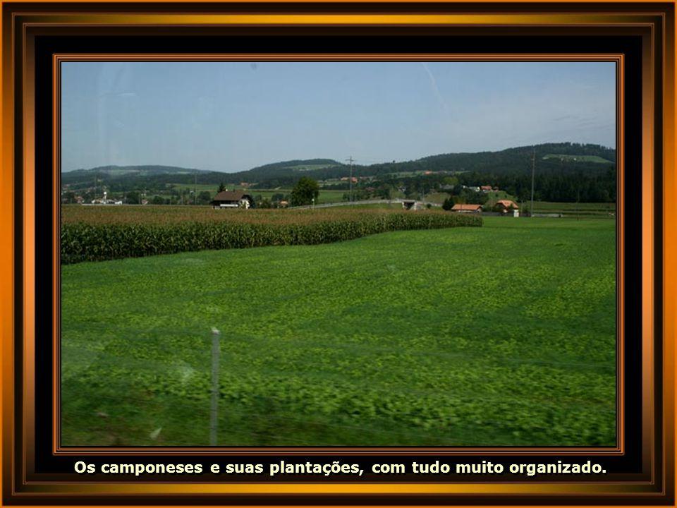 Os camponeses e suas plantações, com tudo muito organizado.