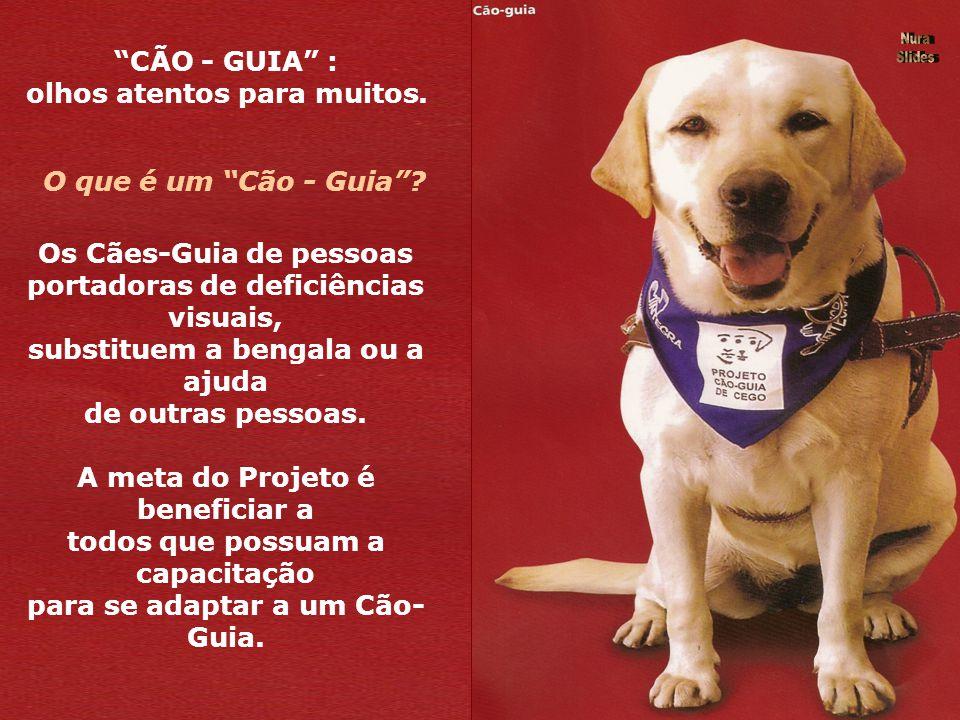 CÃO - GUIA : olhos atentos para muitos.O que é um Cão - Guia.