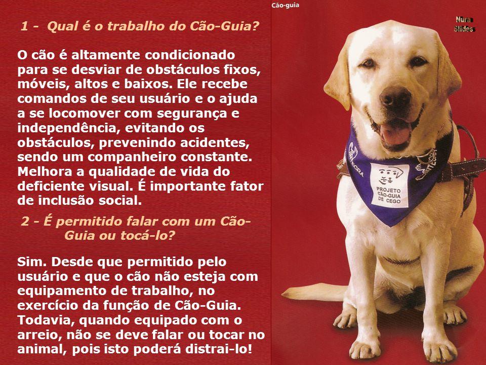 CÃO - GUIA : olhos atentos para muitos. O que é um Cão - Guia? Os Cães-Guia de pessoas portadoras de deficiências visuais, substituem a bengala ou a a