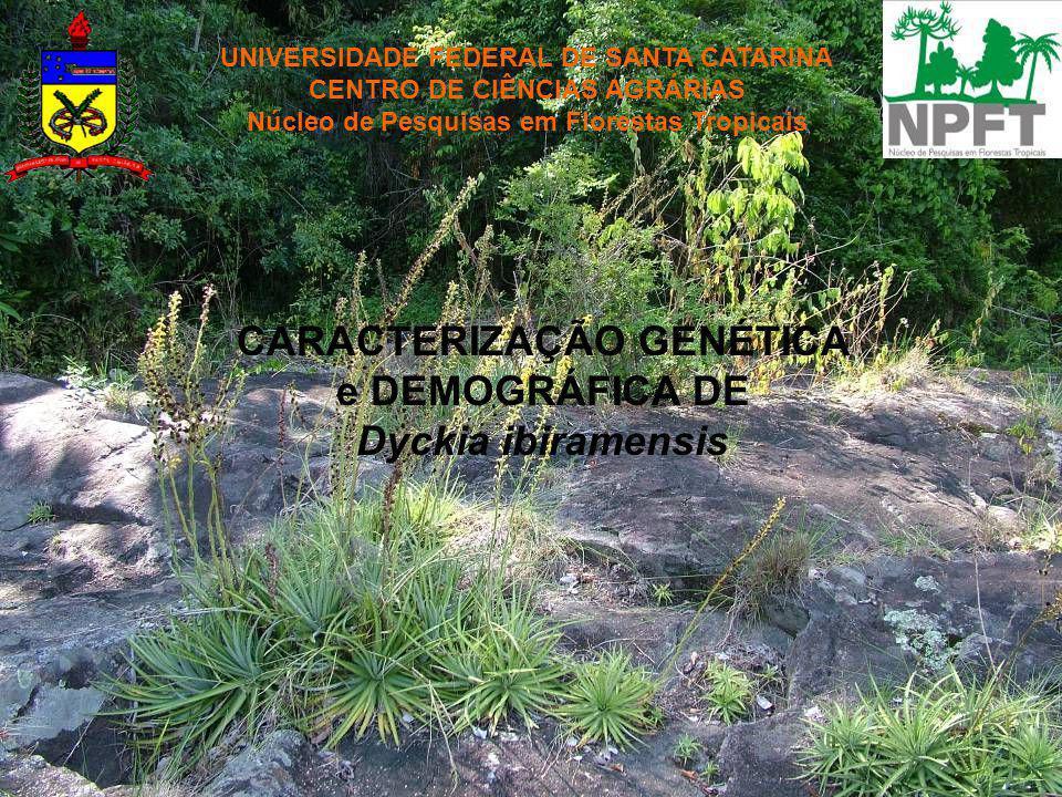 UNIVERSIDADE FEDERAL DE SANTA CATARINA CENTRO DE CIÊNCIAS AGRÁRIAS Núcleo de Pesquisas em Florestas Tropicais CARACTERIZAÇÃO GENÉTICA e DEMOGRÁFICA DE