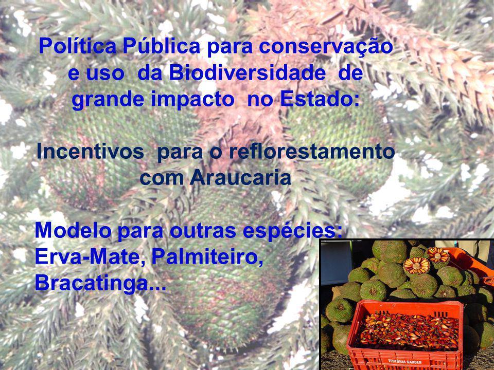 Política Pública para conservação e uso da Biodiversidade de grande impacto no Estado: Incentivos para o reflorestamento com Araucaria Modelo para out