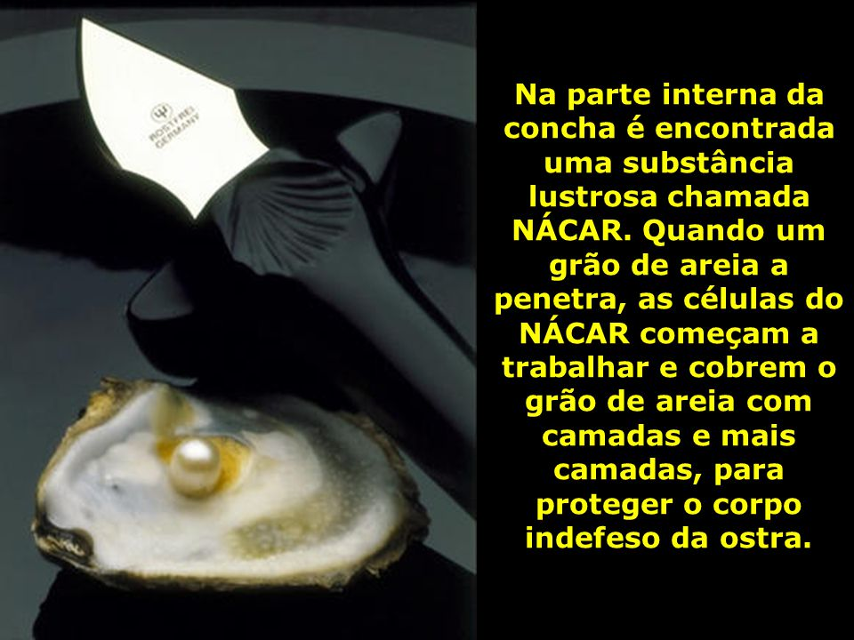 Na parte interna da concha é encontrada uma substância lustrosa chamada NÁCAR.
