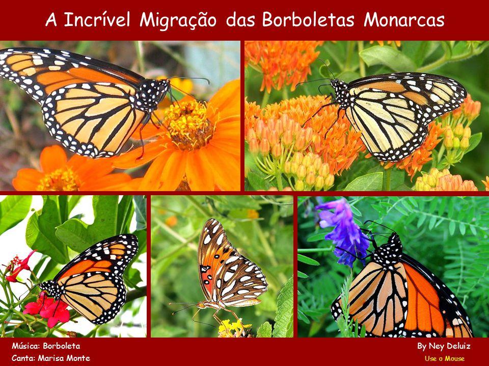 A Incrível Migração das Borboletas Monarcas Música: Borboleta By Ney Deluiz Canta: Marisa Monte Use o Mouse