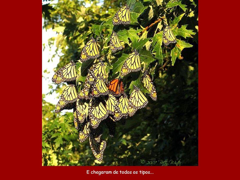 Durante alguns dias (e apenas numa determinada área em torno da cidade) é borboleta por todo canto.