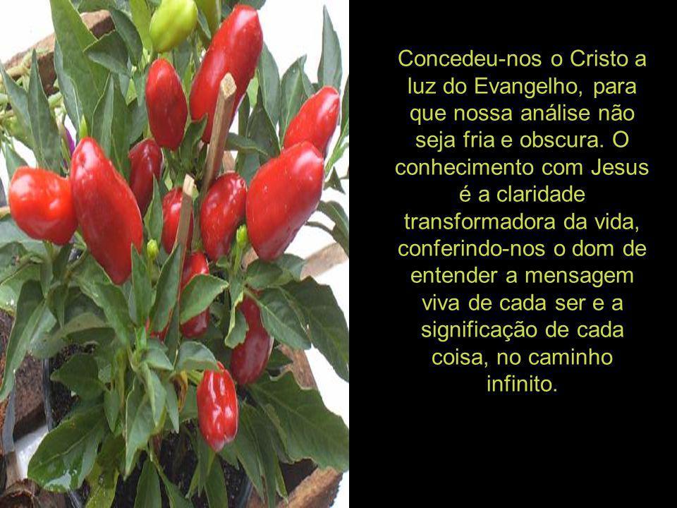 Concedeu-nos o Cristo a luz do Evangelho, para que nossa análise não seja fria e obscura.