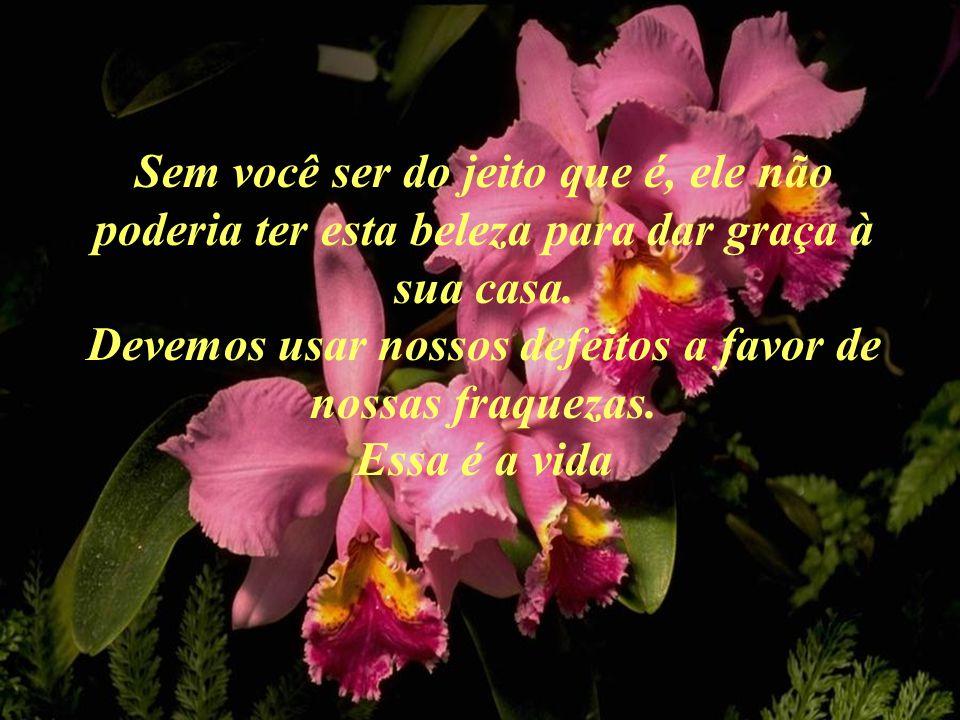 - Quando retornarmos para a casa de meu senhor, quero que percebas as flores ao longo do caminho. Disse o homem ao pote: - Você notou que pelo caminho