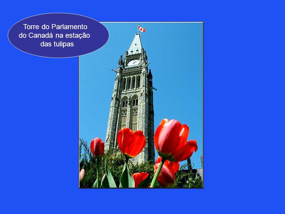 Este espetáculo lindo em flor convida todos a uma visita a Ottawa, durante a estação das tulipas !