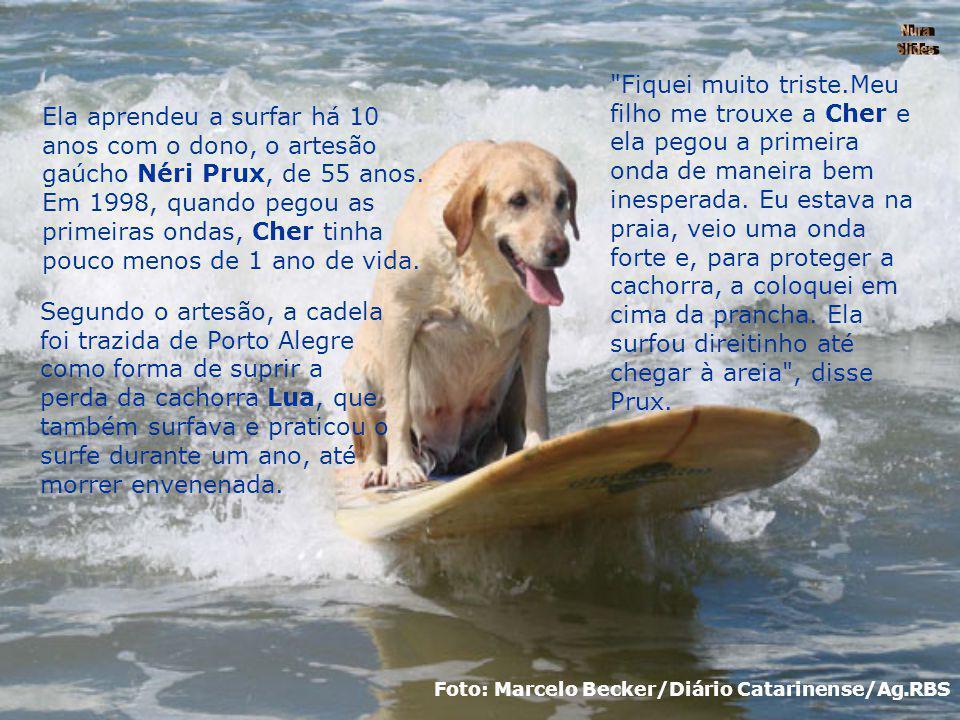 Cher da raça labrador tem 45 quilos e encara as ondas há 10 anos no litoral de Santa Catarina. Foto: Marcelo Becker/Diário Catarinense/Ag.RBS