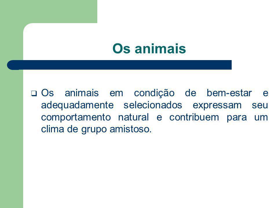 Os animais Os animais em condição de bem-estar e adequadamente selecionados expressam seu comportamento natural e contribuem para um clima de grupo am