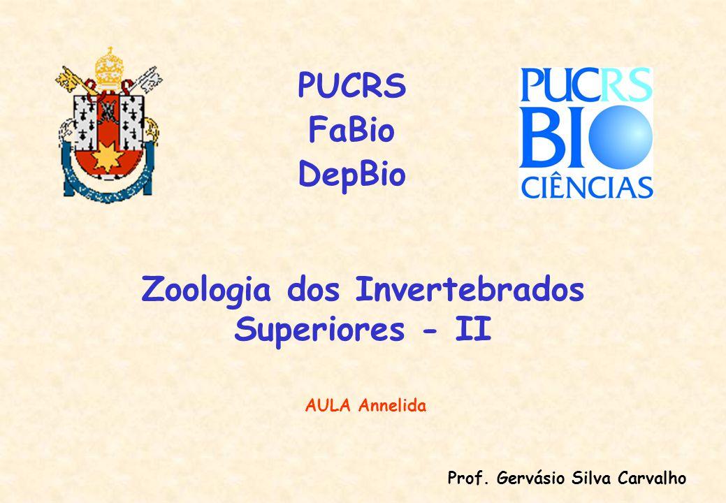 FILO ANNELIDA Lamarck, 1809 Do Grego annulatus = anelado; em anéis Cuvier, 1816 uniu Annelida + Arthropoda Articulata Inicialmente somente poliquetos e minhocas pois sanguessugas eram tidas como trematodos (platielmintos).