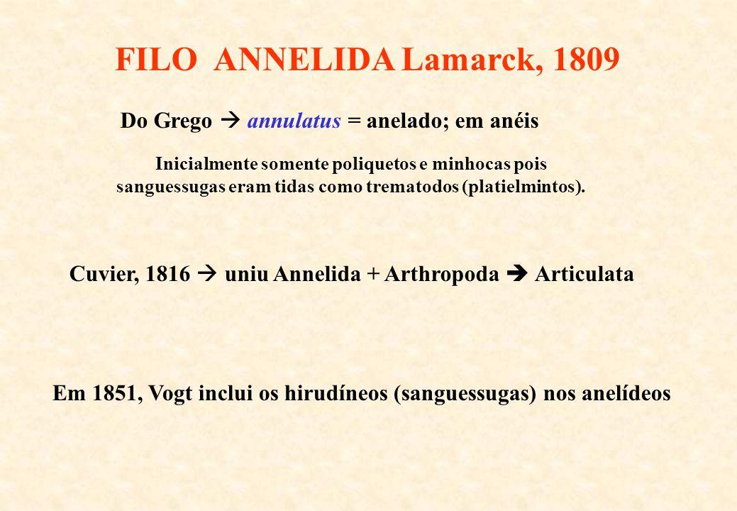 FILO ANNELIDA Lamarck, 1809 Do Grego annulatus = anelado; em anéis Cuvier, 1816 uniu Annelida + Arthropoda Articulata Inicialmente somente poliquetos
