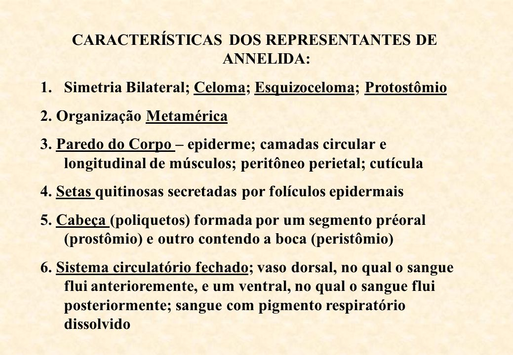 CARACTERÍSTICAS DOS REPRESENTANTES DE ANNELIDA: 1.Simetria Bilateral; Celoma; Esquizoceloma; ProtostômioCelomaEsquizocelomaProtostômio 2. Organização