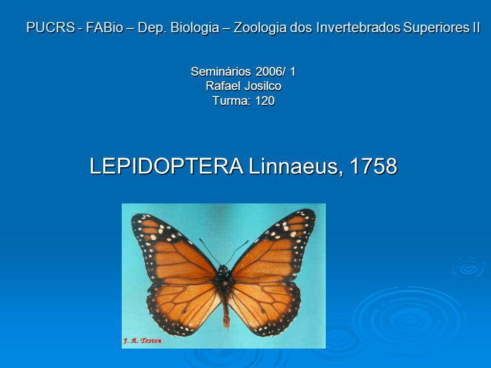 1.Aspectos morfológicos diagnósticos *Significado etimológico do nome cientifico: Lépido = escamas ptera= asas Lepidóptera = asas com escamas Lepidóptera = asas com escamas *A ordem dos Lepidópteros é representada por borboletas e mariposas.