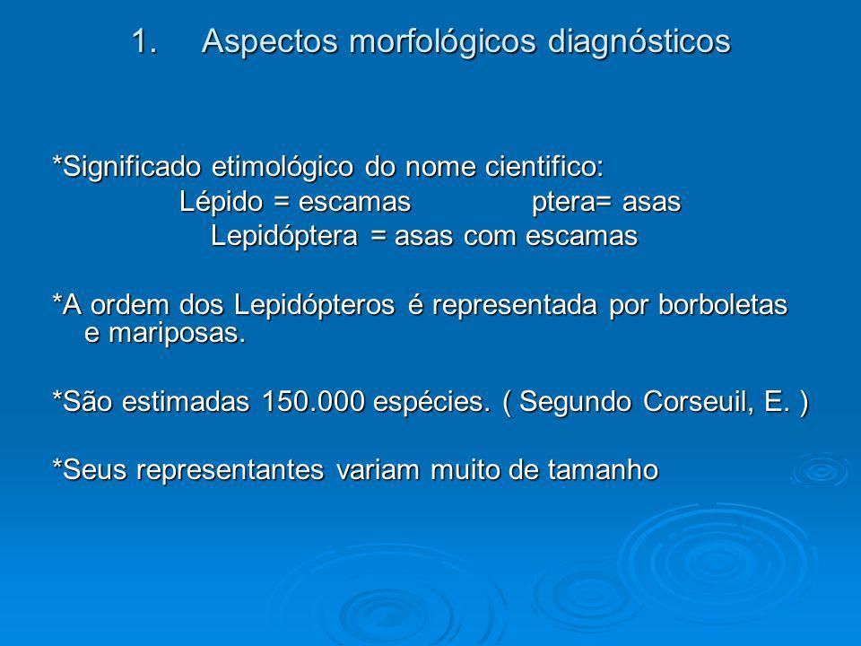 1.Aspectos morfológicos diagnósticos *Significado etimológico do nome cientifico: Lépido = escamas ptera= asas Lepidóptera = asas com escamas Lepidópt