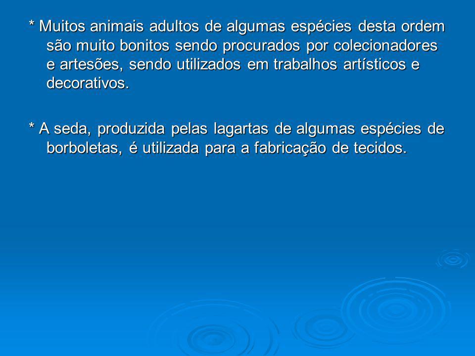 * Muitos animais adultos de algumas espécies desta ordem são muito bonitos sendo procurados por colecionadores e artesões, sendo utilizados em trabalh