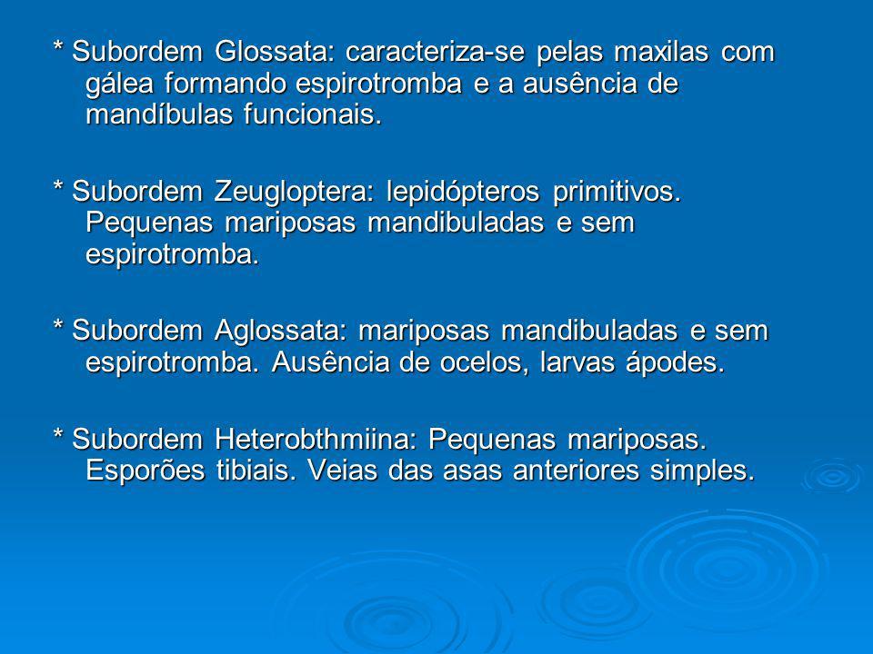 * Subordem Glossata: caracteriza-se pelas maxilas com gálea formando espirotromba e a ausência de mandíbulas funcionais. * Subordem Zeugloptera: lepid