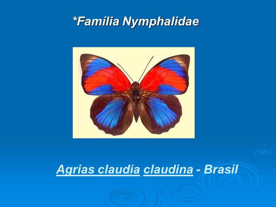 *Família Nymphalidae Agrias claudia claudina - Brasil