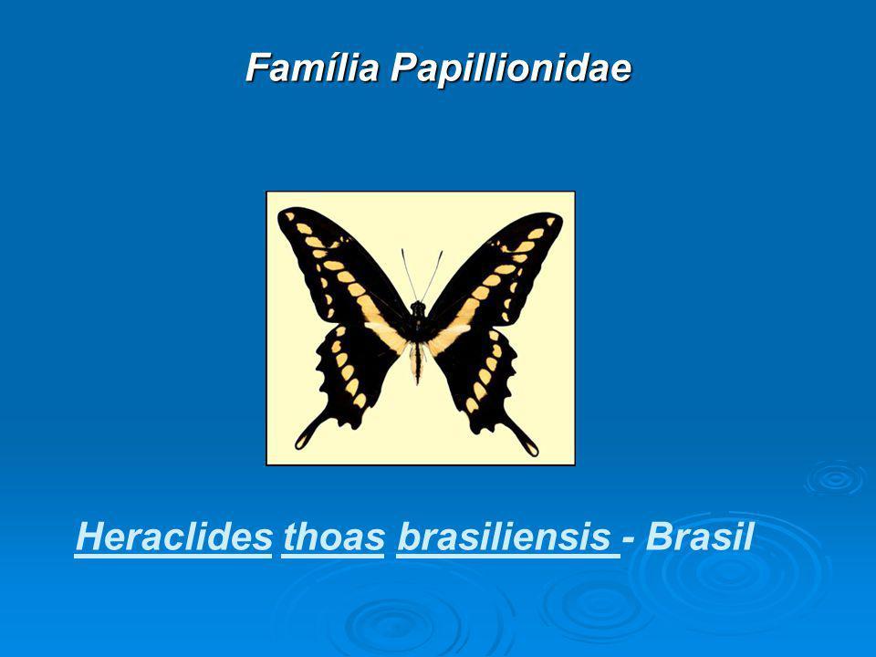 Família Papillionidae Heraclides thoas brasiliensis - Brasil