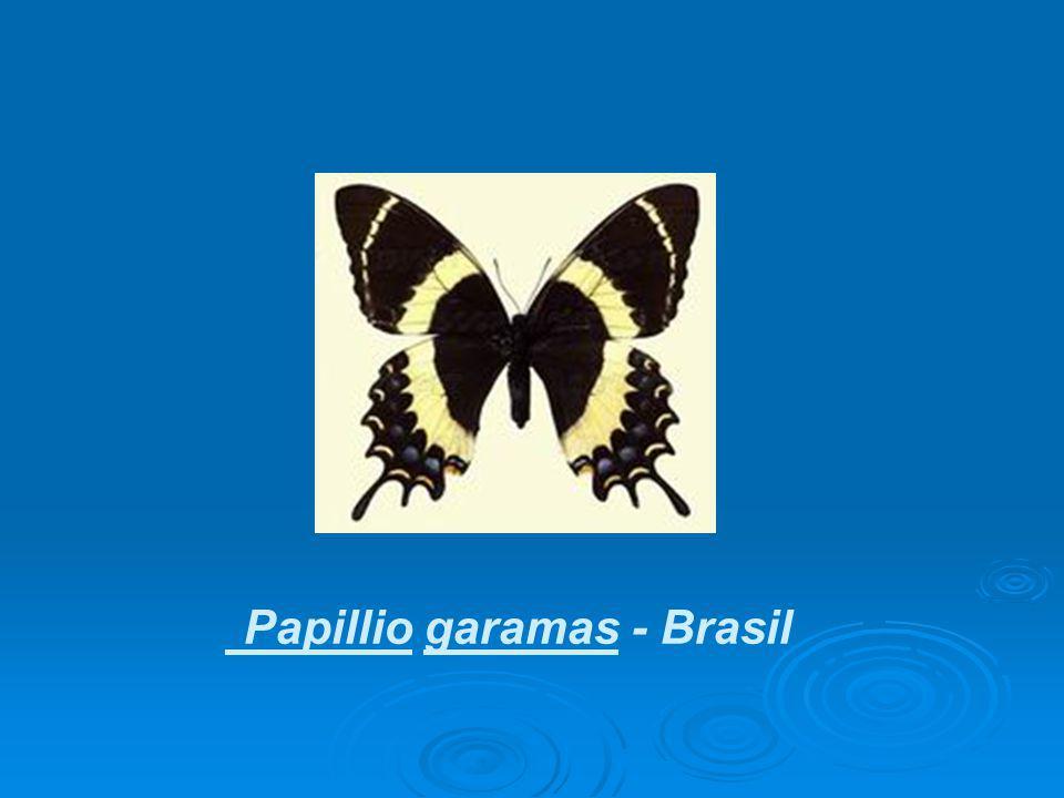 Papillio garamas - Brasil