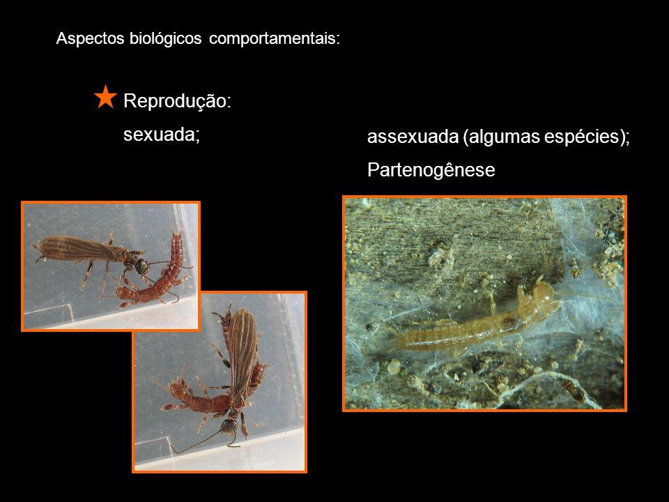 Aspectos biológicos comportamentais: Reprodução: sexuada; assexuada (algumas espécies); Partenogênese