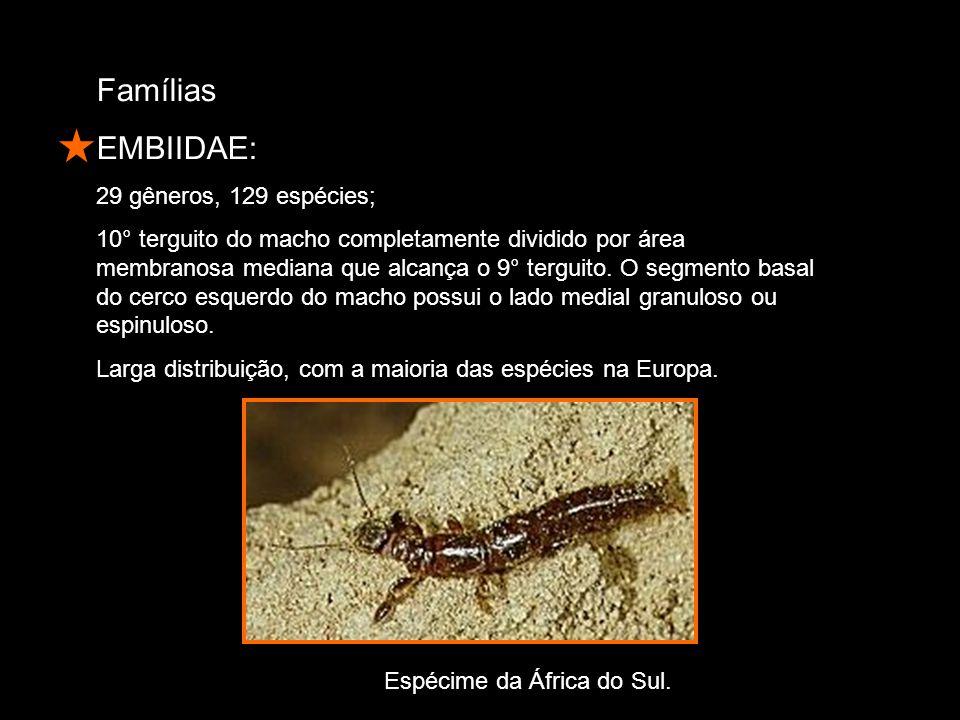 Famílias EMBIIDAE: 29 gêneros, 129 espécies; 10° terguito do macho completamente dividido por área membranosa mediana que alcança o 9° terguito.
