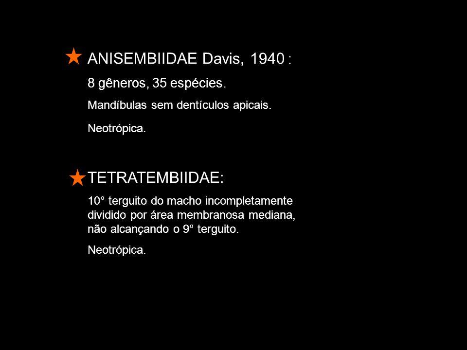 ANISEMBIIDAE Davis, 1940 : 8 gêneros, 35 espécies.