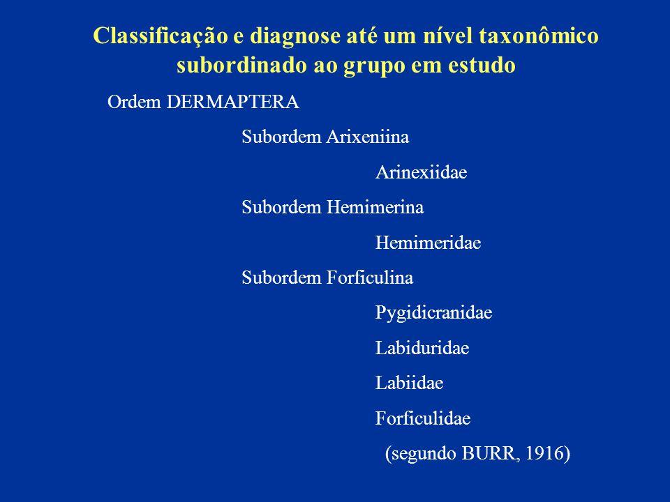 Classificação e diagnose até um nível taxonômico subordinado ao grupo em estudo Ordem DERMAPTERA Subordem Arixeniina Arinexiidae Subordem Hemimerina H