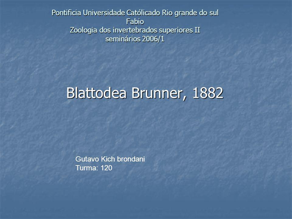 Pontificia Universidade Católicado Rio grande do sul Fabio Zoologia dos invertebrados superiores II seminários 2006/1 Blattodea Brunner, 1882 Gutavo K