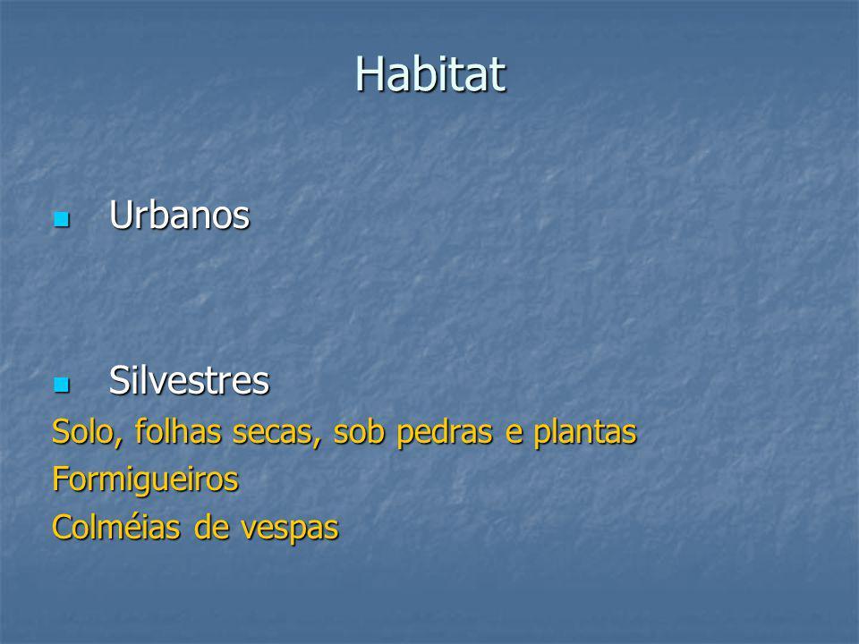 Habitat Urbanos Urbanos Silvestres Silvestres Solo, folhas secas, sob pedras e plantas Formigueiros Colméias de vespas