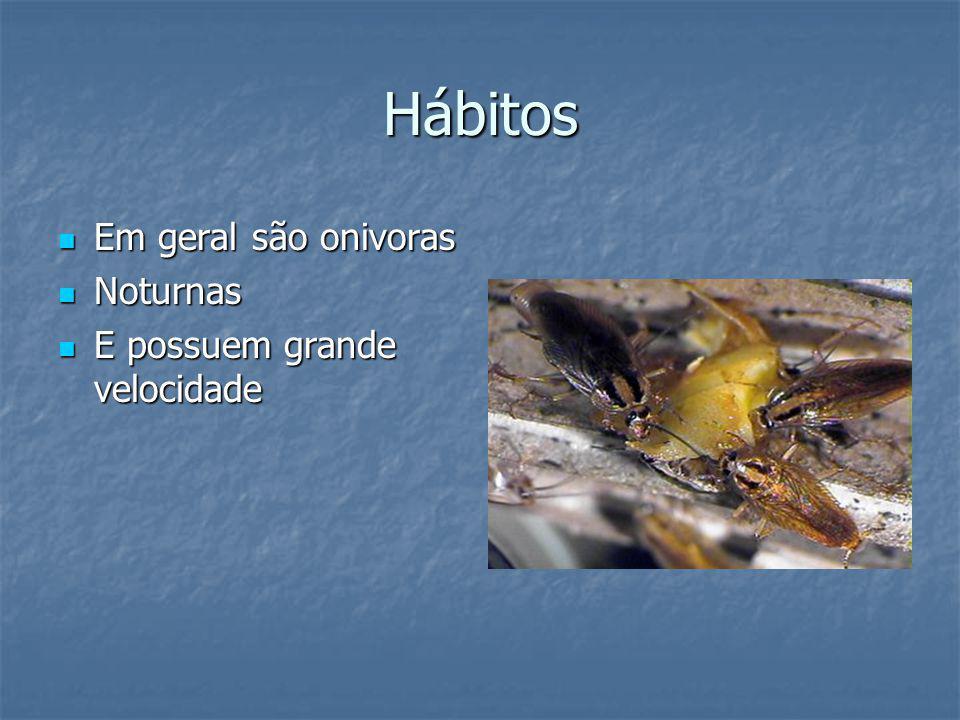 Hábitos Em geral são onivoras Em geral são onivoras Noturnas Noturnas E possuem grande velocidade E possuem grande velocidade