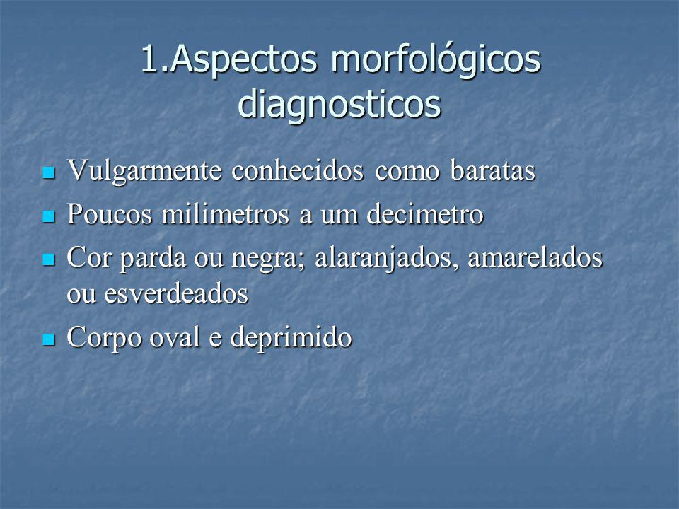 1.Aspectos morfológicos diagnosticos Vulgarmente conhecidos como baratas Vulgarmente conhecidos como baratas Poucos milimetros a um decimetro Poucos m