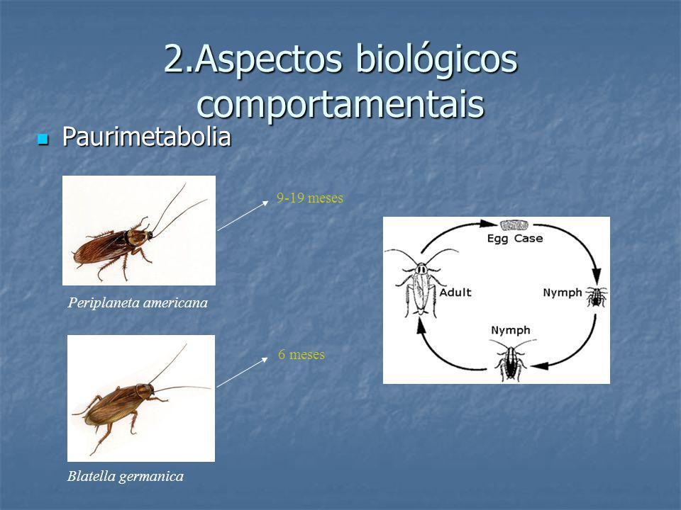 2.Aspectos biológicos comportamentais Paurimetabolia Paurimetabolia Periplaneta americana Blatella germanica 9-19 meses 6 meses