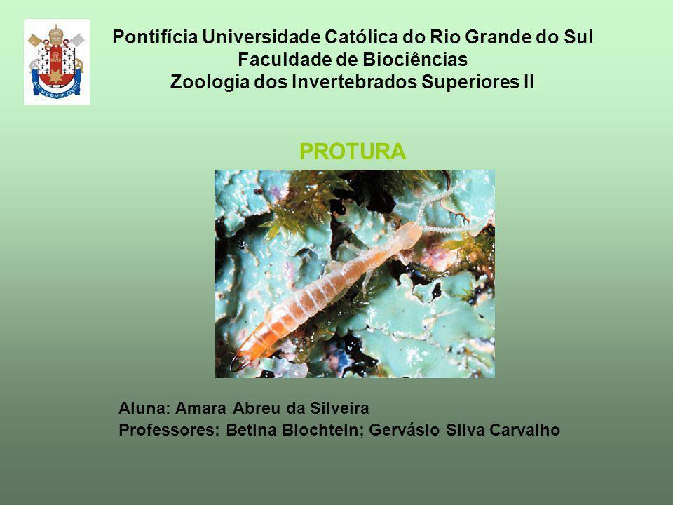 Pontifícia Universidade Católica do Rio Grande do Sul Faculdade de Biociências Zoologia dos Invertebrados Superiores II PROTURA Aluna: Amara Abreu da