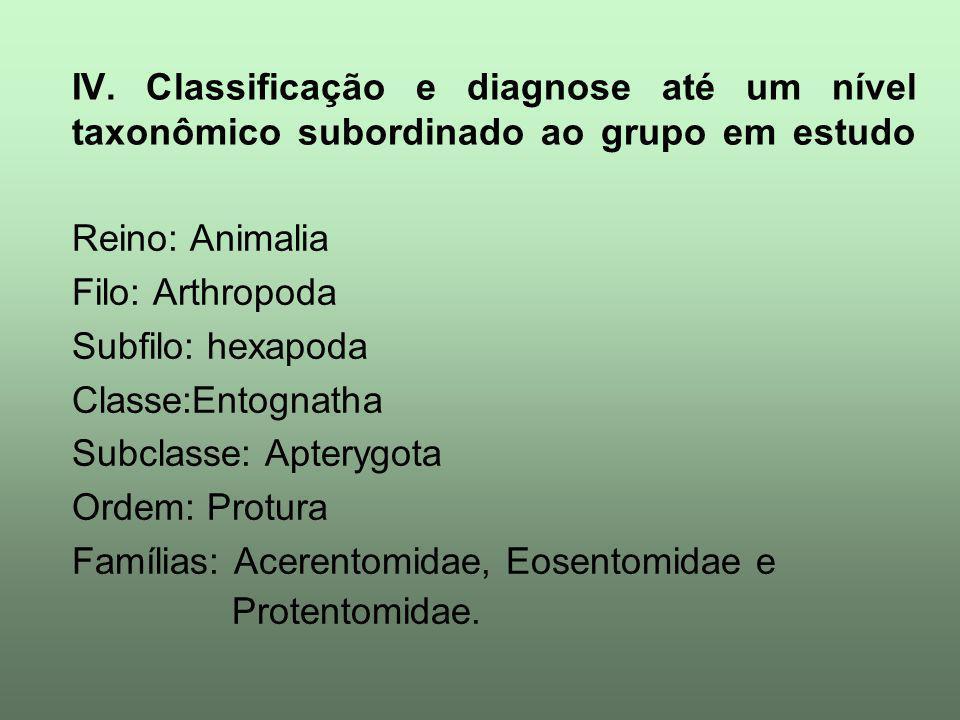 IV. Classificação e diagnose até um nível taxonômico subordinado ao grupo em estudo Reino: Animalia Filo: Arthropoda Subfilo: hexapoda Classe:Entognat