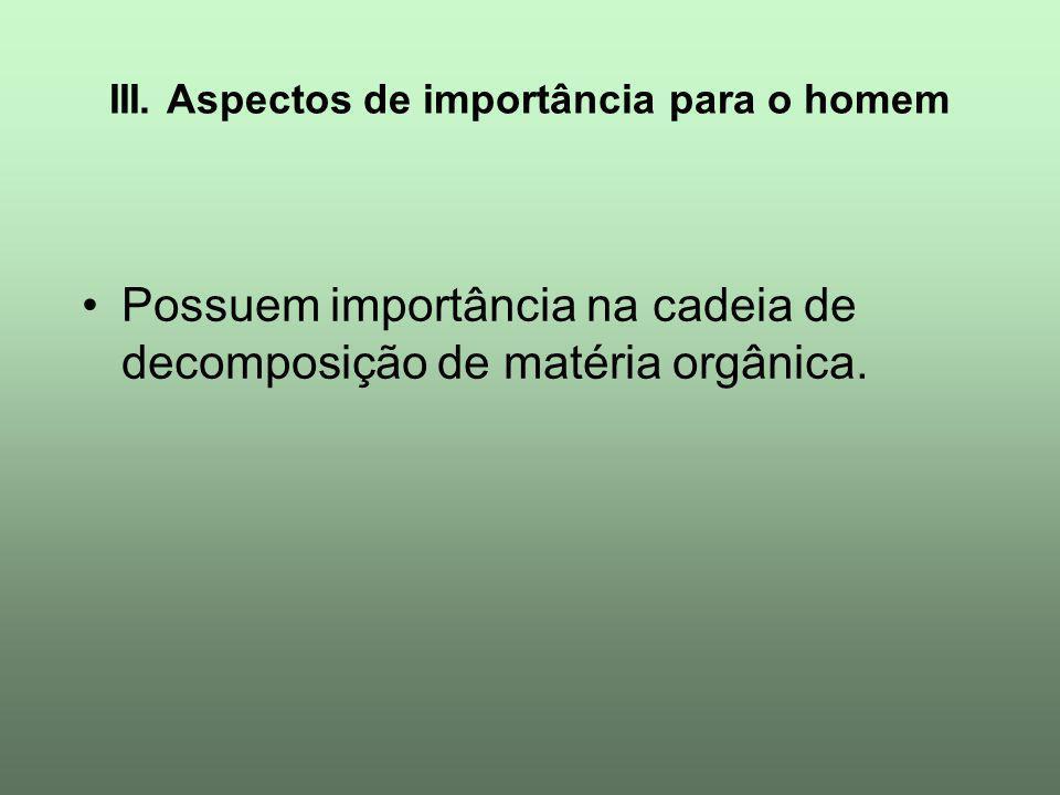 III. Aspectos de importância para o homem Possuem importância na cadeia de decomposição de matéria orgânica.