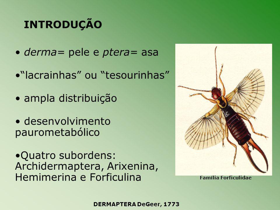 INTRODUÇÃO Subordem Archidermaptera fóssil Período Jurássico cercos multiarticulados 4 ou 5 tarsômeros DERMAPTERA DeGeer, 1773