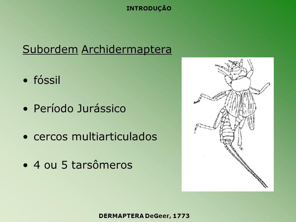 INTRODUÇÃO Subordem Arixenina ápteros vivíparos vivem associados à morcegos Ásia DERMAPTERA DeGeer, 1773