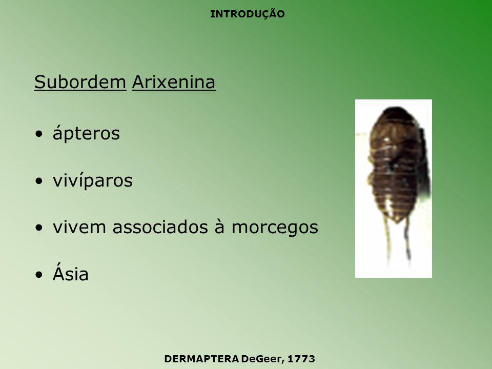 INTRODUÇÃO Subordem Hemimerina ápteros vivíparos vivem associados à roedores África DERMAPTERA DeGeer, 1773