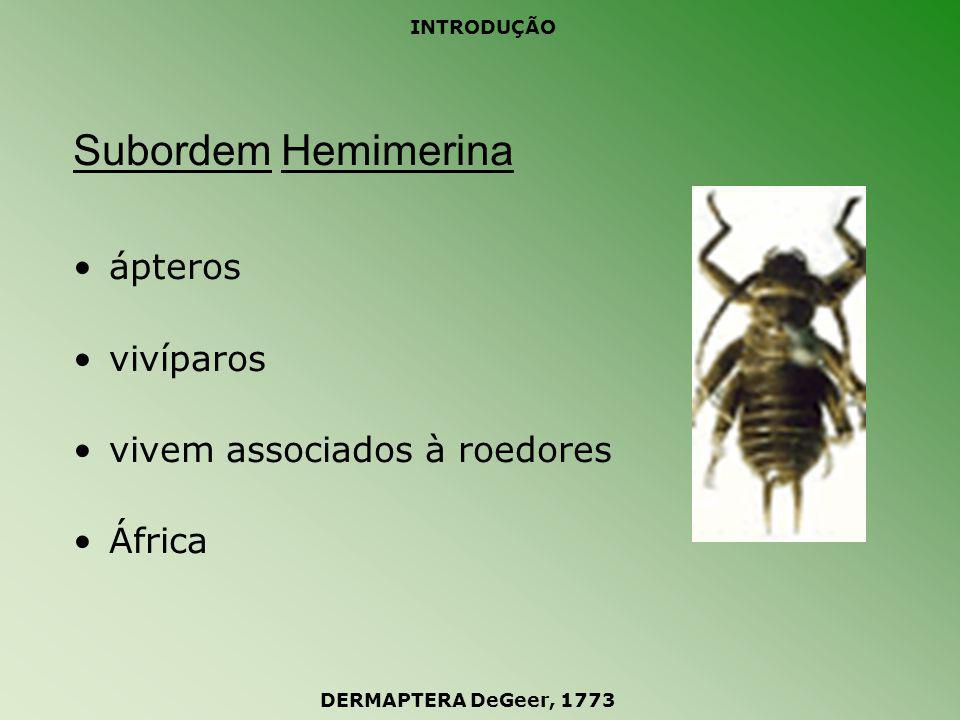 INTRODUÇÃO Subordem Forficulina tesourinhas comuns subordem mais representativa cerca de 1800 espécies DERMAPTERA DeGeer, 1773