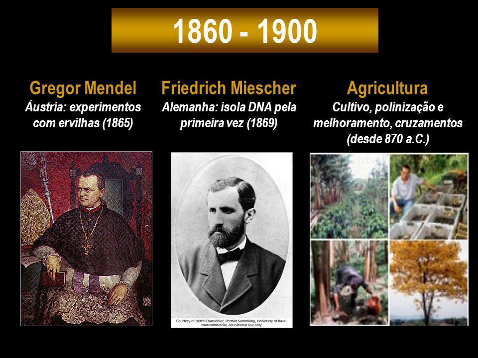 1860 - 1900 Gregor Mendel Áustria: experimentos com ervilhas (1865) Friedrich Miescher Alemanha: isola DNA pela primeira vez (1869) Agricultura Cultiv