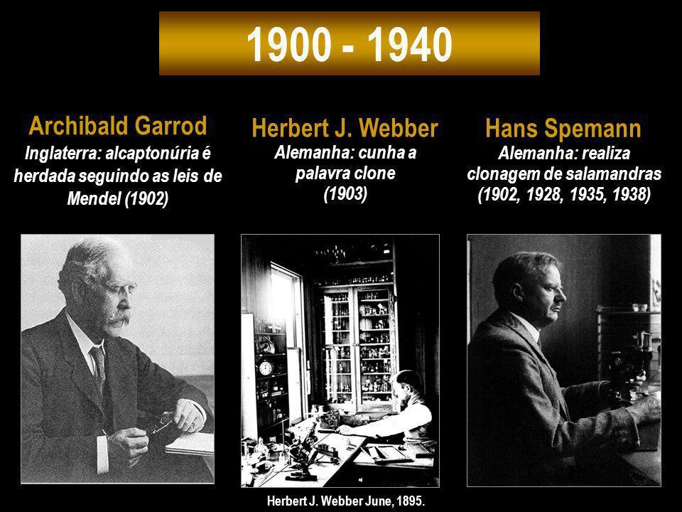 1900 - 1940 Archibald Garrod Inglaterra: alcaptonúria é herdada seguindo as leis de Mendel (1902) Hans Spemann Alemanha: realiza clonagem de salamandr