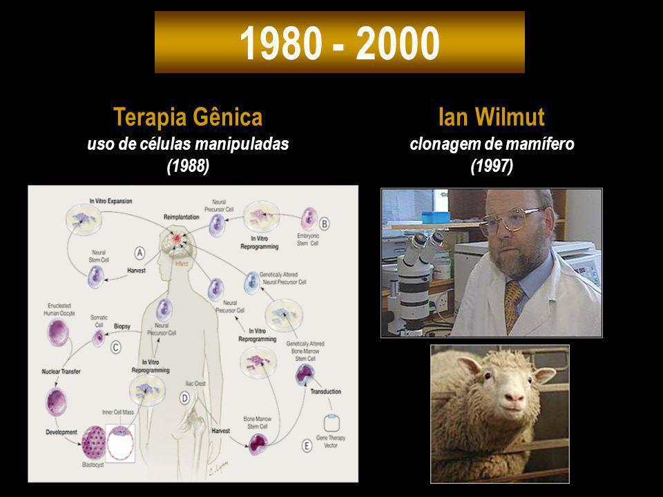 1980 - 2000 Ian Wilmut clonagem de mamífero (1997) Terapia Gênica uso de células manipuladas (1988)