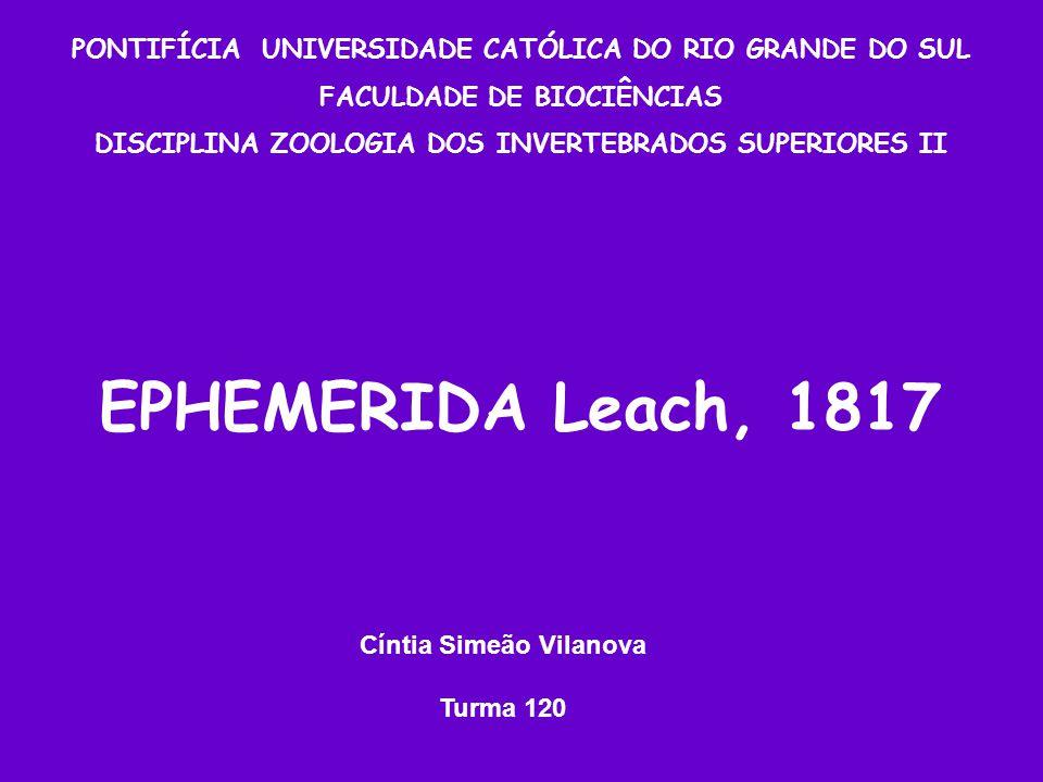 PONTIFÍCIA UNIVERSIDADE CATÓLICA DO RIO GRANDE DO SUL FACULDADE DE BIOCIÊNCIAS DISCIPLINA ZOOLOGIA DOS INVERTEBRADOS SUPERIORES II EPHEMERIDA Leach, 1