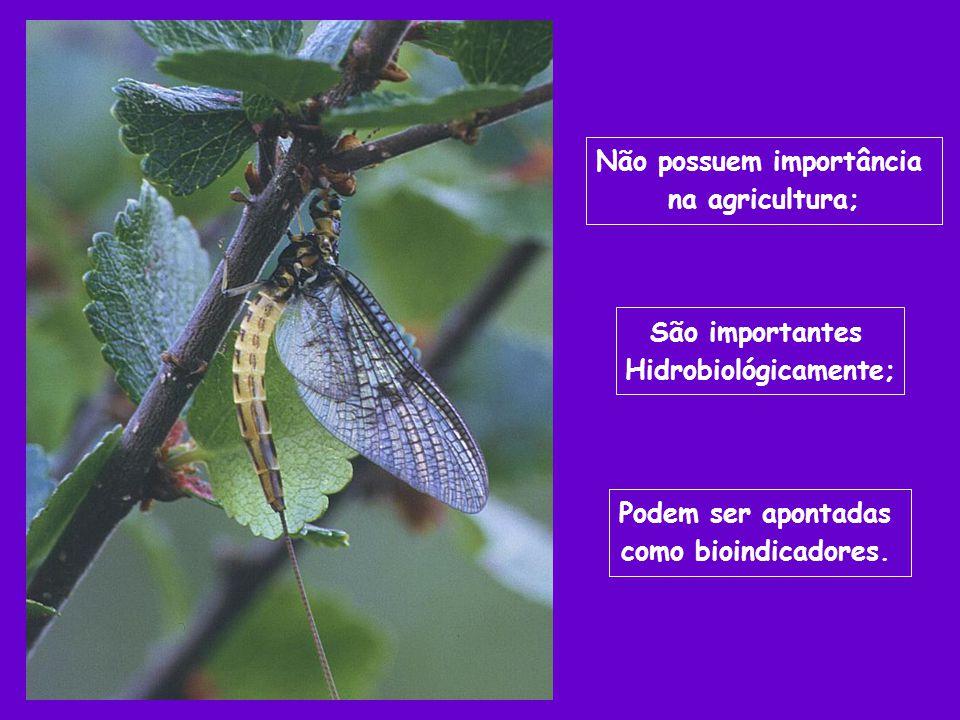 Podem ser apontadas como bioindicadores. Não possuem importância na agricultura; São importantes Hidrobiológicamente;