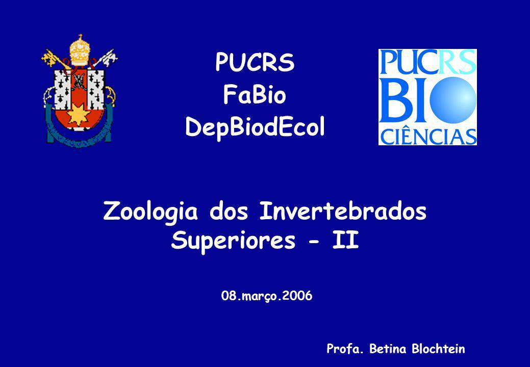 Hexapoda Generalidades: - Maior táxon de animais (1.200.000 spp.
