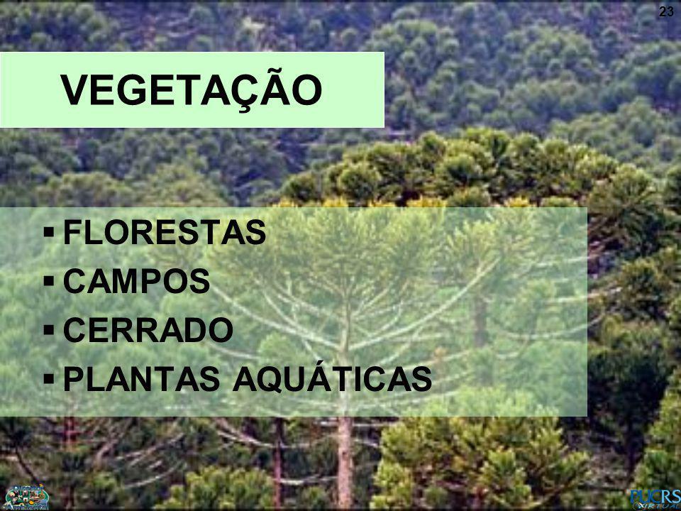 23 VEGETAÇÃO FLORESTAS CAMPOS CERRADO PLANTAS AQUÁTICAS
