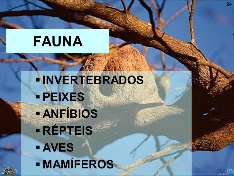 24 FAUNA INVERTEBRADOS PEIXES ANFÍBIOS RÉPTEIS AVES MAMÍFEROS
