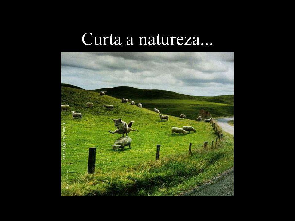 Curta a natureza...