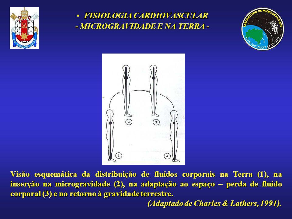 FISIOLOGIA CARDIOVASCULARFISIOLOGIA CARDIOVASCULAR - MICROGRAVIDADE E NA TERRA - Visão esquemática da distribuição de fluídos corporais na Terra (1),